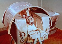 Laika before launch in 1957 (AP Photo/NASA)