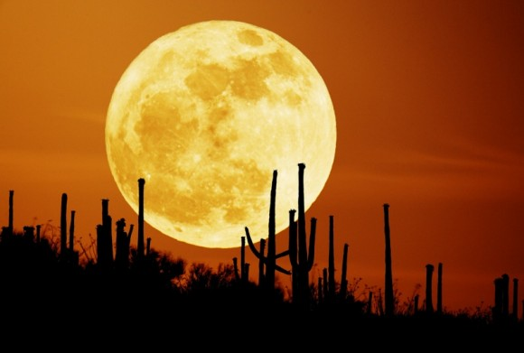 September 26, 2007 APOD - Saguaro Moon by Stefan Seip