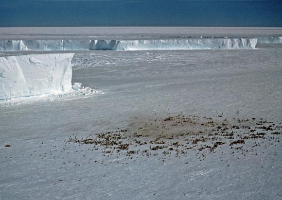 An emporer penguin colony at Halley Bay. Credit: British Antarctic Survey