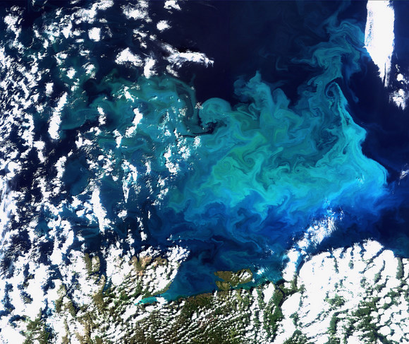 This Envisat image captures a plankton bloom in the Barents Sea. Credit: ESA