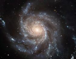 This Hubble image reveals the gigantic Pinwheel Galax