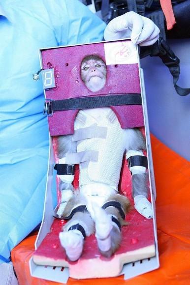 Iran's space monkey. Via Fox News.