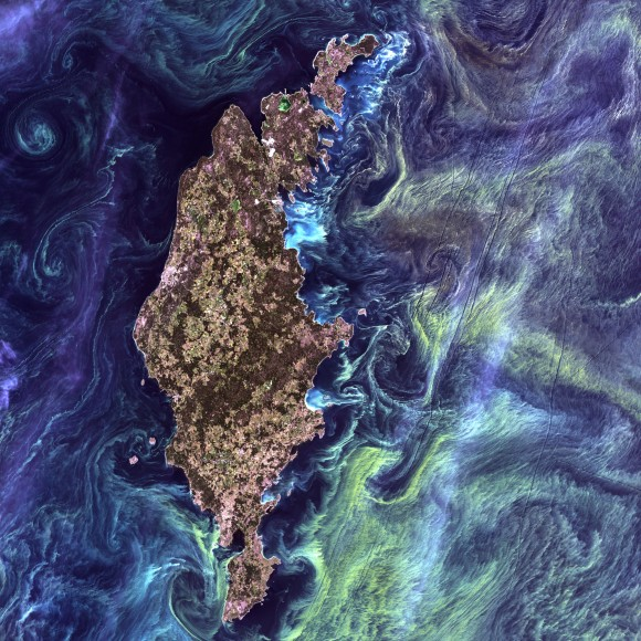NASA once compared this image of phytoplankton surrounding Gotland to Vincent Van Gogh's &quot;Starry Night.&quot; Credit: Landsat