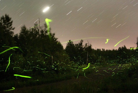 Fireflies make green trails of light during a time exposure on a July night. Jupiter is at upper left. Credit: Bob King