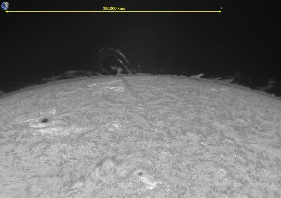 Size comparison of the looping prominences on the Sun on August 20, 2013. Credit and copyright: Michel Collart.