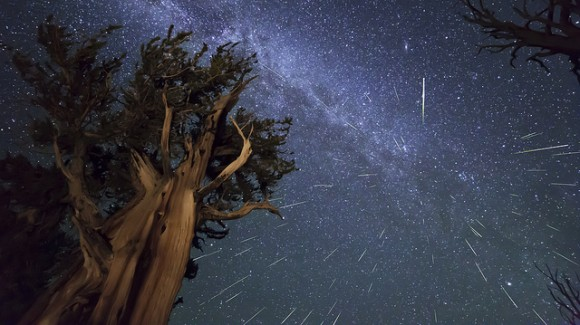 Perseid Meteors over Ancient Bristlecone Pine in the White Mountains of California. This is a composite shot of 73 meteors, aligned as they were captured according to where they were against the stars. Credit and copyright: Kenneth Brandon.