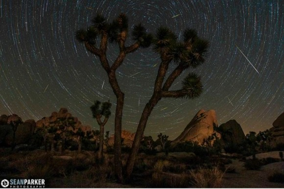 Perseids over Joshua Tree. This is a composite image composed of 180 stills from a static timelapse sequence, aiming towards the  North Star. Taken on August 9, 2013. Credit and copyright: Sean Parker/Sean Parker Photography.
