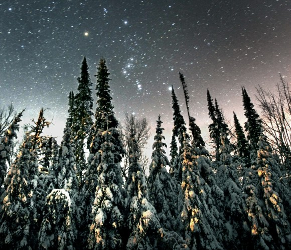Orion steps above towering spruce on a January evening. Credit: Bob King