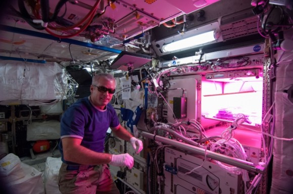 Expedition 39 flight engineer Steve Swanson activates the Veg-01 experiment (NASA/Koichi Wakata)