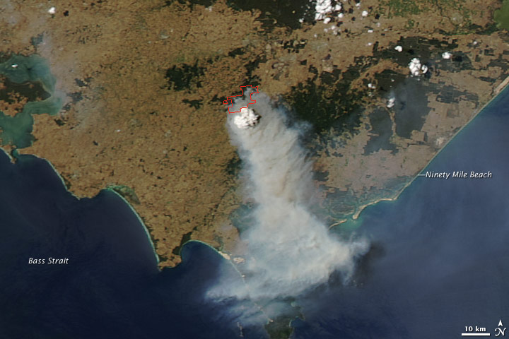 Bush fires in california essay