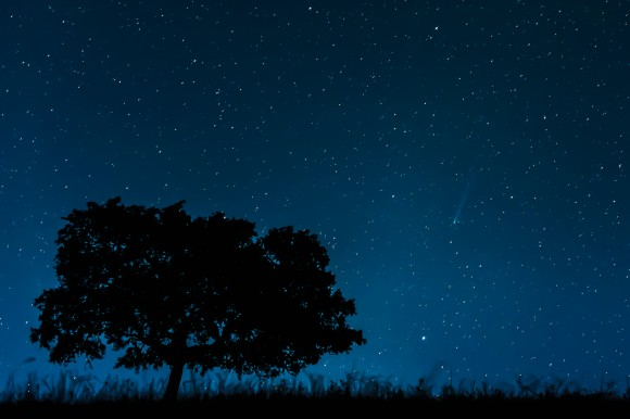 """Comet ISON"" -- People's Choice award winner: Eric Cardoso, Setúbal, Portugal,  Credit: Eric Cardoso"